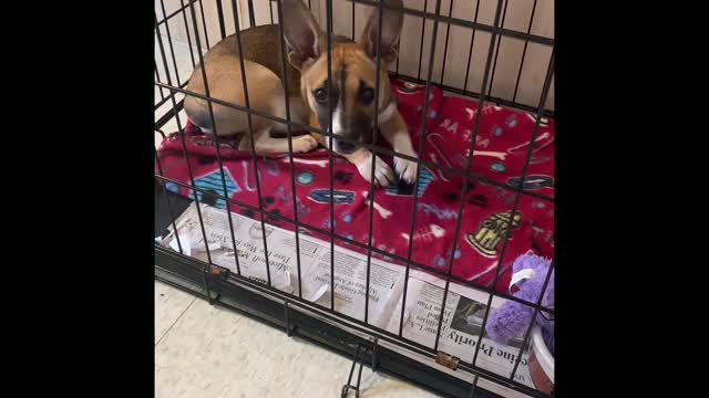 LUCY, an adoptable Mixed Breed in Cranston, RI