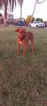 Lucile, an adoptable Labrador Retriever Mix in San Diego, CA_image-1