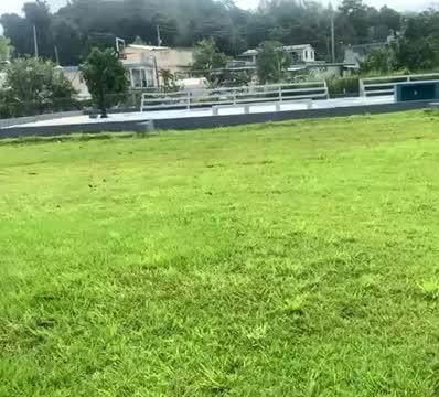 Apollo, an adoptable Pit Bull Terrier Mix in Loiza, PR