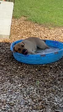 Ranger - Foster Needed, an adoptable Labrador Retriever Mix in Willington, CT_image-1