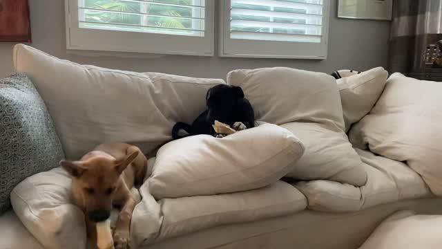 Bruno, an adoptable Labrador Retriever & Terrier Mix in San Diego, CA_image-1