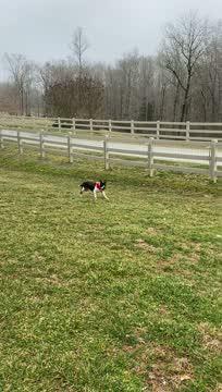 Sarah T., an adoptable American Bulldog Mix in Mocksville, NC_image-1