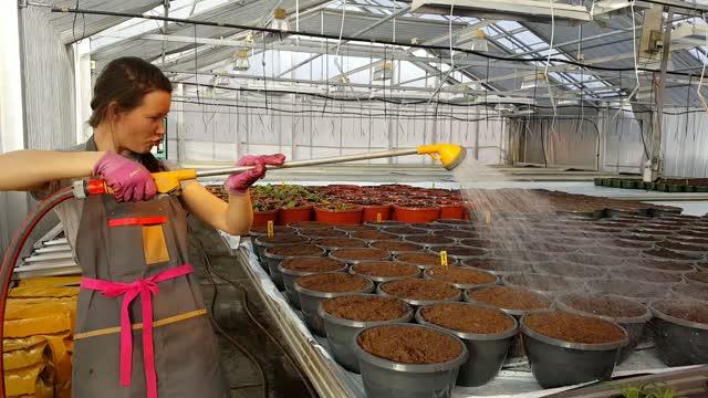 Nygård gartneri tromsø