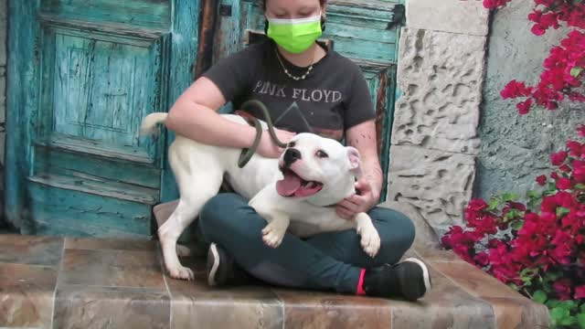 Wendy, an adoptable Boxer & Pit Bull Terrier Mix in Lexington, VA_image-1
