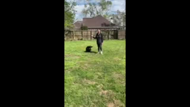 Kurt, an adoptable Labrador Retriever Mix in Willington, CT_image-1