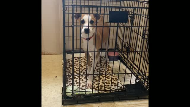 SNOOPY, an adoptable Mixed Breed in Cranston, RI