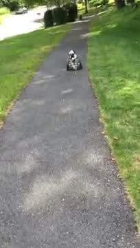 Jerry, an adoptable Cocker Spaniel in Mount Gretna, PA