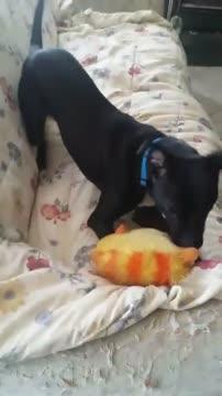 Tucker, an adoptable Terrier & Black Labrador Retriever Mix in Sanford, NC_image-1